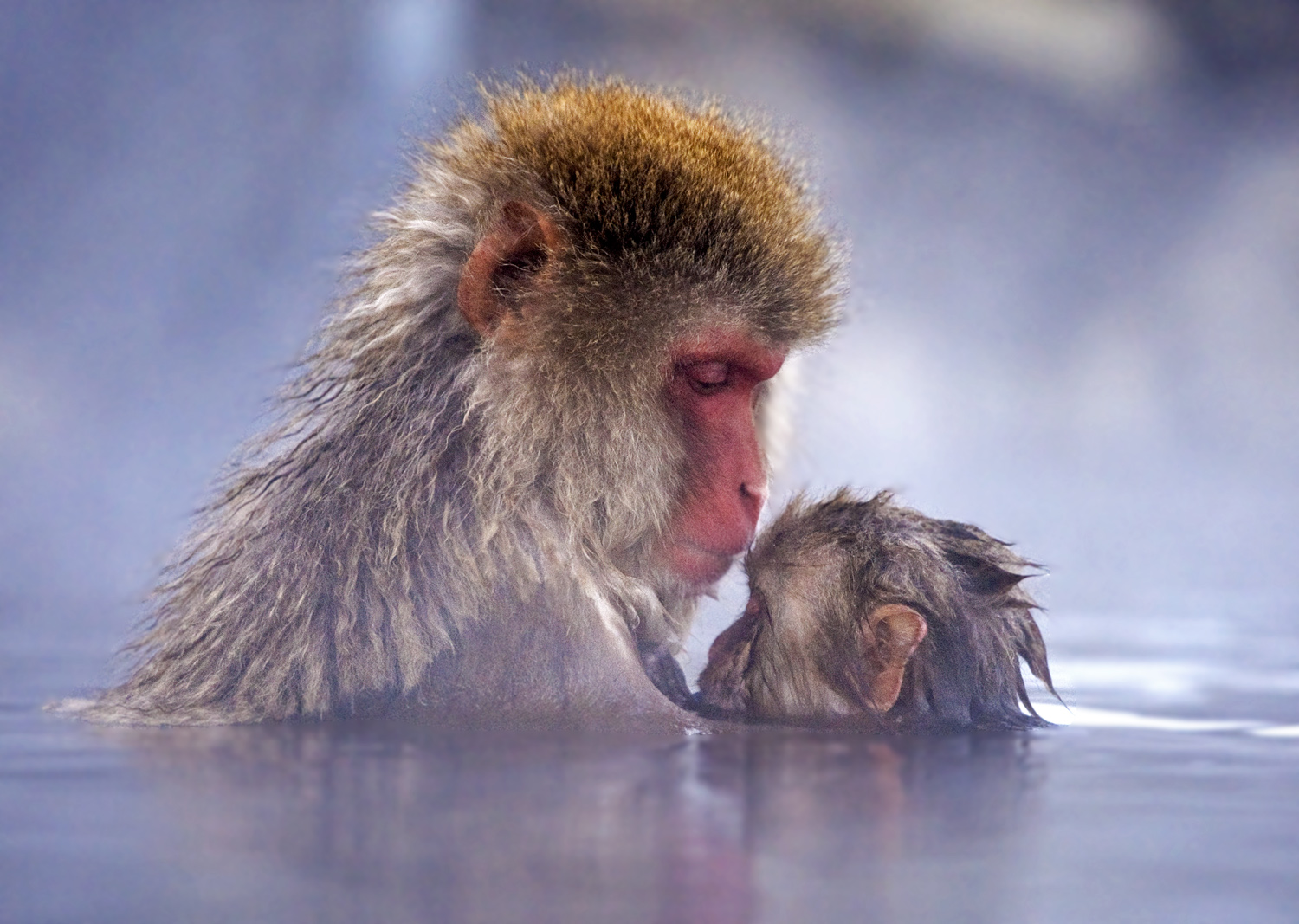 0-7 Steve Mandel_Snow Monkey Mother and Child_Wildlife